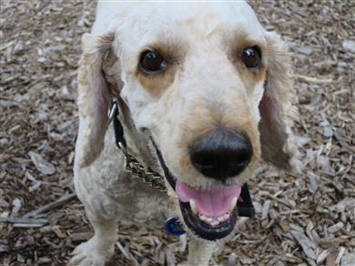 Happy healthy Archie dog