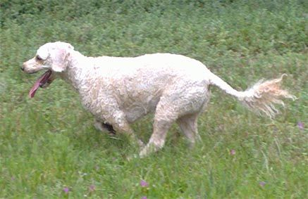 Archie Dog Rabbit tracking