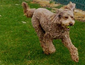 Gypsy dog in full flight