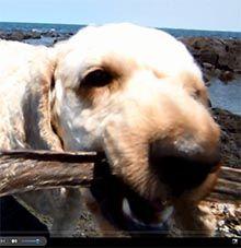 dog eating beef jerky