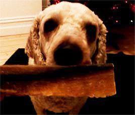 flake fillet dog treat
