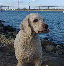 Archie Dog Profile