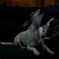 pauly dog singing