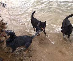 sidney gizmo lenny dogs