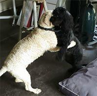 zizi archie dogs