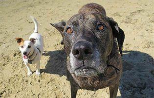 Dog Treats Australia dogs