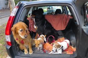 Dog treat Australia dog treat fed dogs