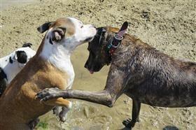 healthy dog treats dogs