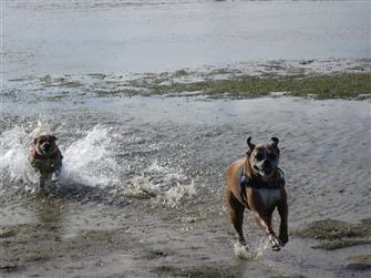 healthy dog treats Australia dogs