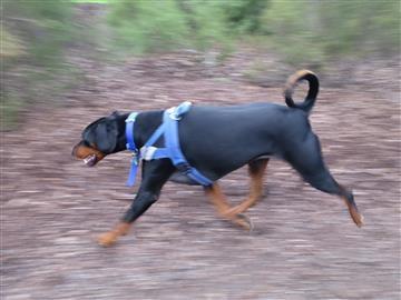 A black dog black dog treats dog