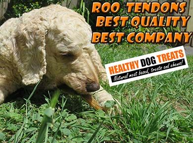 Archie dog eating Roo Tendon