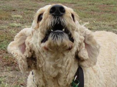 A true healthy dog treat fan dog
