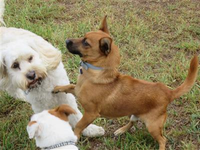 natural dogs playing