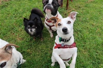 dog treats on a dog walk dogs