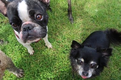 best dog training-treats