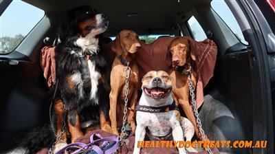 healthy dog treat customers