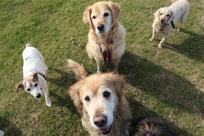 Happy Healthy Dog Treat fed dogs