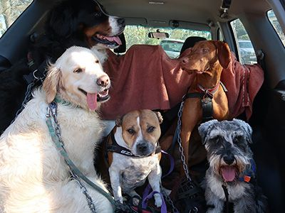 dogs-in-a-car
