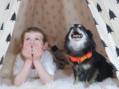 Best Christmas dog treats online, waiting ...