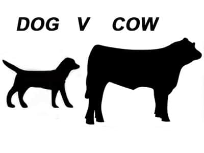 Dog-V-Cow-nutrition