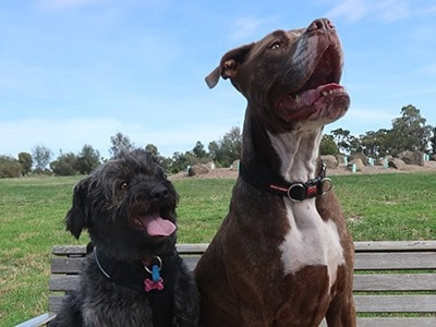 Lucy-and-Bonny-dogs