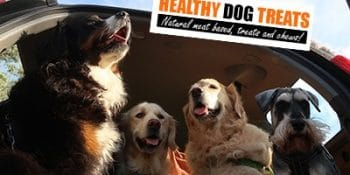 Super premium meat-first, high-protein dog food & why dog treats are always better.