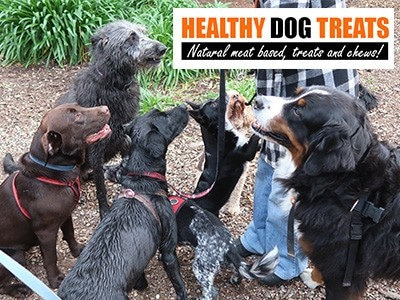 Dogs wanting Healthy Dog Treats