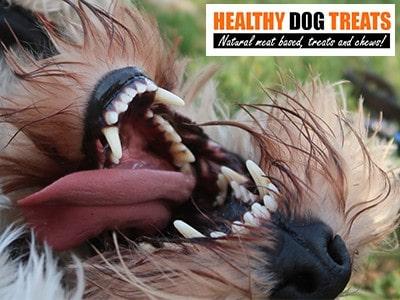 Dog Teeth very Clean