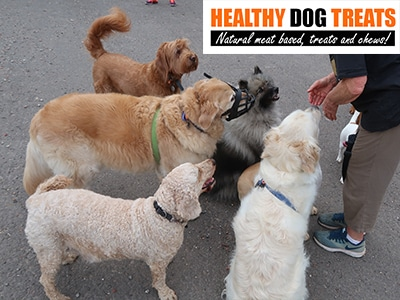 dogs waiting for Healthy Dog Treats