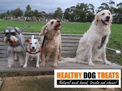 Healthy dogs on a seat