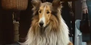 Important Lessons in dog food from a Lassie film.