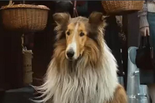 happy dog lassie