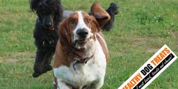 Why dogs hide their healthy dog treats