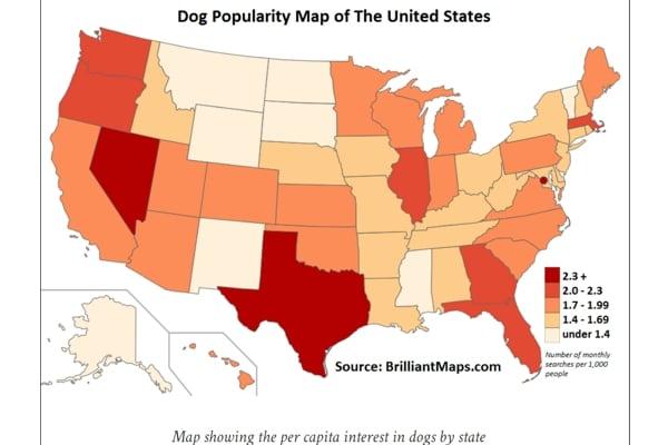 dog popularity usa 2020