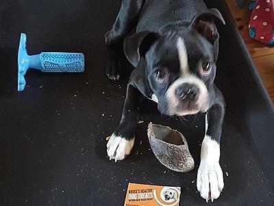 Happy healthy dog treats dog!