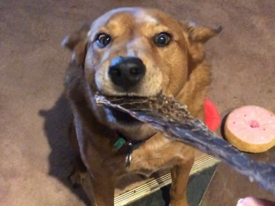 Super Healthy dog treats dog Jake !