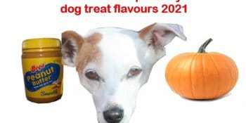 TOP dog treats people are looking for in Australia, USA and UK in 2021