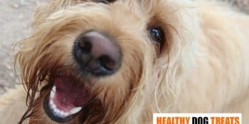 Top 5 Healthy Oils your dog needs. And Why Salmon, beats Coconut, flaxseed oil etc