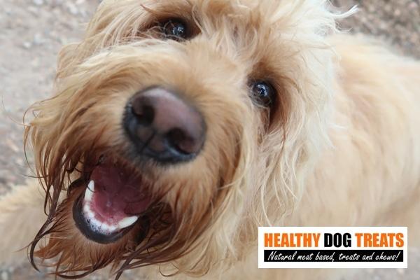 Happy Client dog
