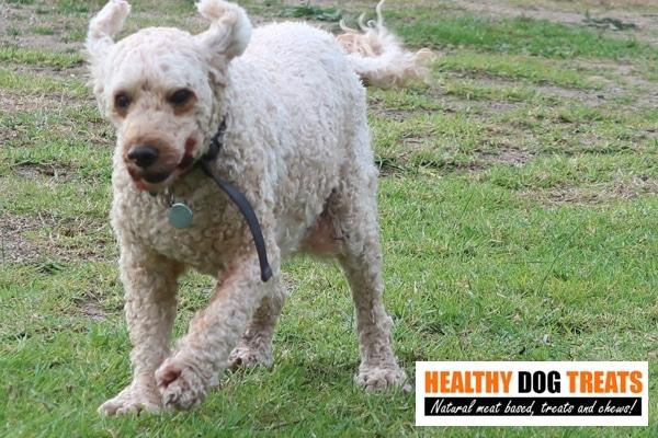 Archie healthy dog treats dog
