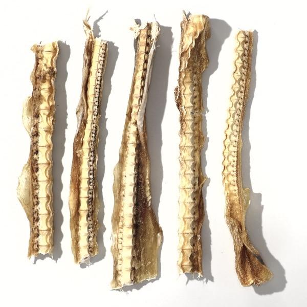 shark cartilage healthy dog treats